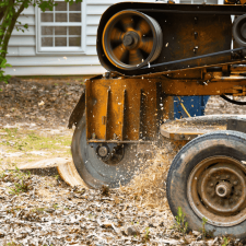 St. Cloud Stump Grinding Removal