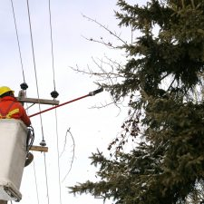 Tree trimming near power lines St. Cloud, MN